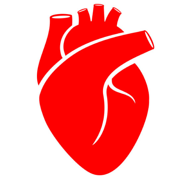 the heart is the center to healthy blood circulation