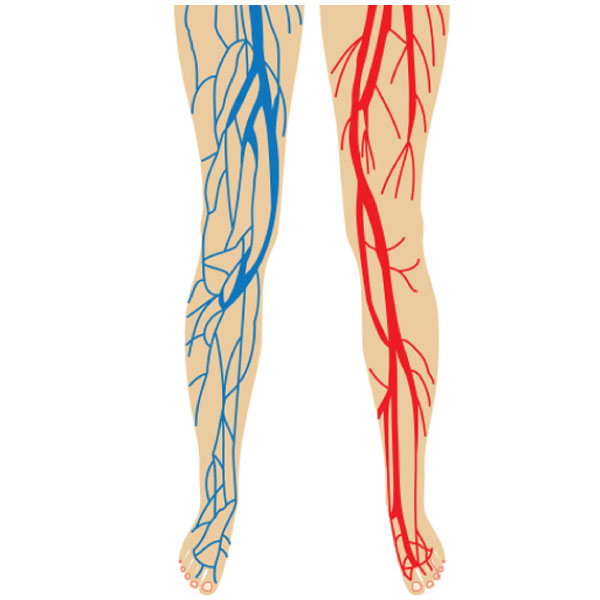 Legs are prone to circulation issues.