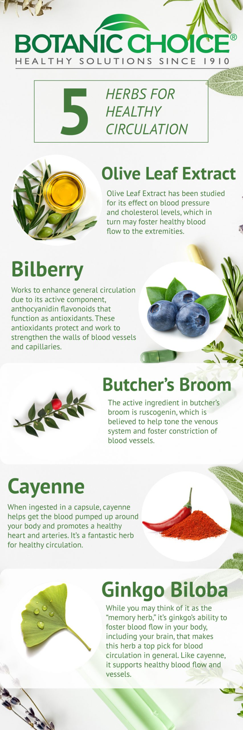 5 herbs for healthy circulation: olive oil extract, bilberry, butchers broom, cayenne, ginkgo biloba