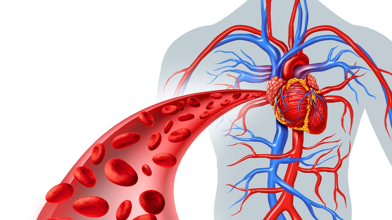 5 herbs for healthy circulation and the circulatory system