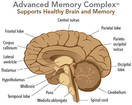 Advanced memory complex supports healthy brain and memory.