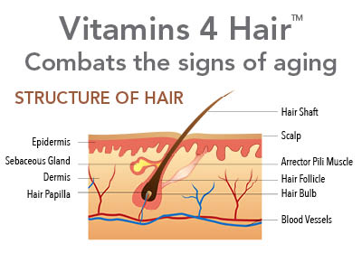 vitamins 4 hair combats the signs of aging, structure of hair includes many parts