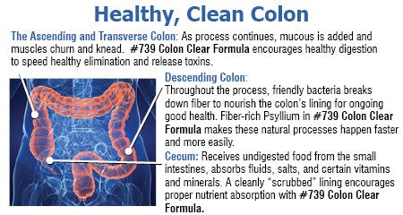 Healthy Clean Colon has 3 parts as the ascending and transverse colon, decending colon, and cecum.